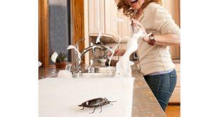 از بین بردن سوسک های خانگی